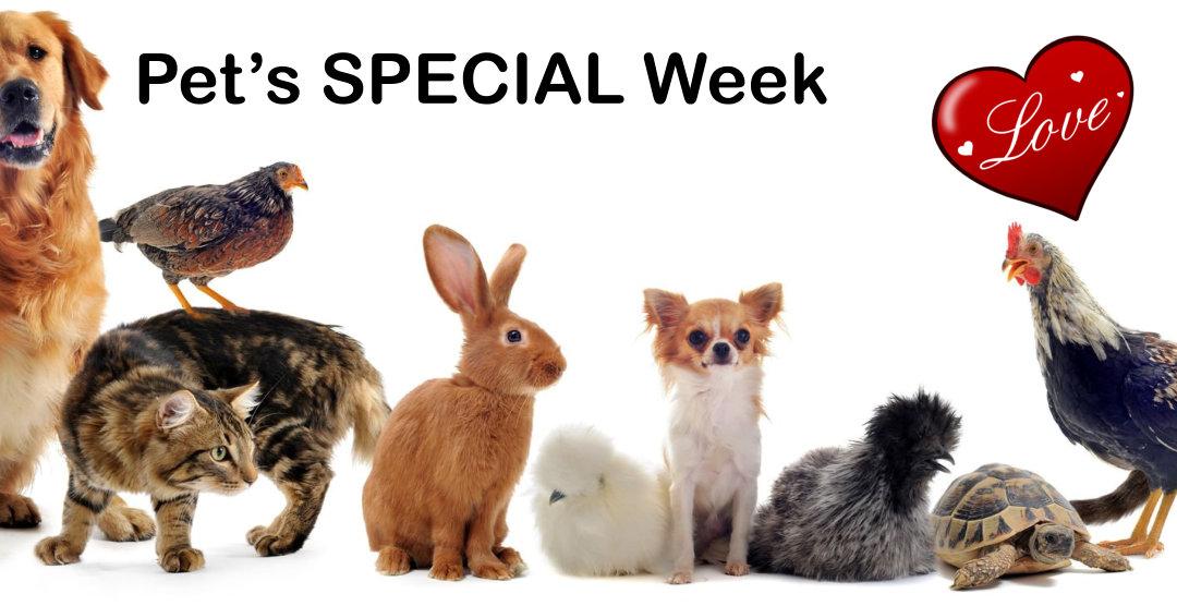 Free Range pet food on special